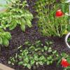 Fresh Tomato Pesto Garden